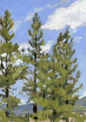 auggies pines, Plein Air Oil Painting by Sarah F Burns