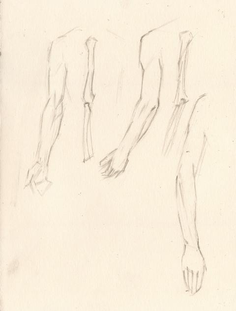 Arm Study with bones