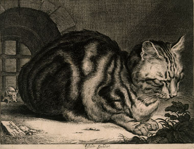 cornelis visscher the large cat