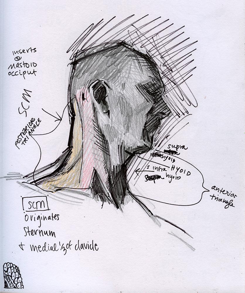 Graphite Sketch by Sarah F Burns
