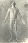 Anterior Male web