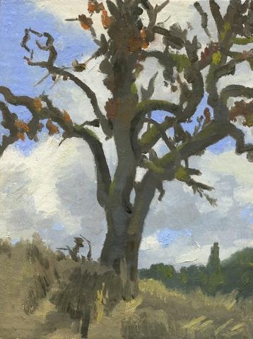 Dying Oak Tree